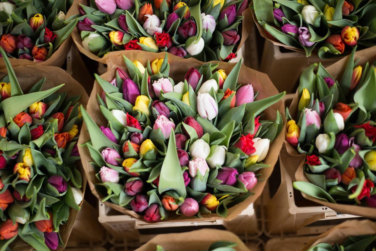 Kytica tulipánov